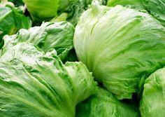 Les variétés de salade - Iceberg