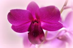 Dreamy Orchid by srravi #nature #mothernature #travel #traveling #vacation #visiting #trip #holiday #tourism #tourist #photooftheday #amazing #picoftheday