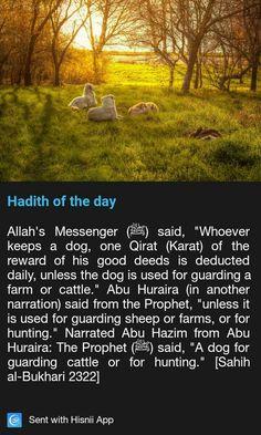 Keeping dogs in islam