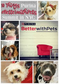 Earlier this week I attended the @purina  #BetterWithPets Summit in NYC. I got to see so many cute fur babies!!  Also, check out 10 things that I learned that I just had to share with you! [ad] #LetsLiveBig #pets #dogs #cats #newyork #brooklyn #NYC