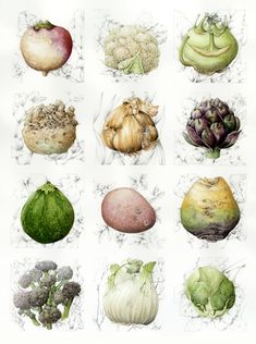 WATERCOLOR BOTANICAL ~ VEGETABLES ~                                                                                                                                                                                 More