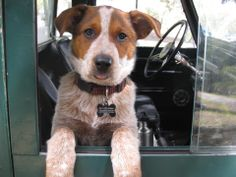 from serie : a dog, a landy