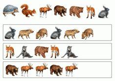тематичексая неделя дикие животные Educational Games, Forest Animals, Close Image, Arrow Keys, Learning Games, Woodland Creatures