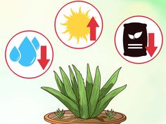 How to Grow an Aloe Plant With Just an Aloe Leaf