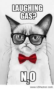 Grumpy science cat