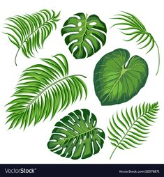 leaves of tropical trees vector illustration 05 Leaf Drawing, Plant Drawing, Tropical Leaves, Tropical Plants, Deco Jungle, Jungle Tree, Tree Sketches, Plant Vector, Leaves Vector