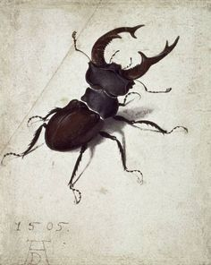 Albrecht Dürer- Der Hirschkäfer