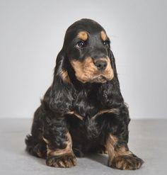 Super Cute Puppies, Cute Little Puppies, Puppies And Kitties, Baby Puppies, Baby Dogs, Cute Dogs, Cute Baby Animals, Animals And Pets, Funny Animals