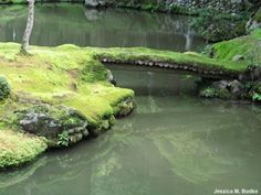 An image of a great moss garden from http://mossplants.fieldofscience.com/2008/09/saiho-ji-temple-moss-temple-while-in.html