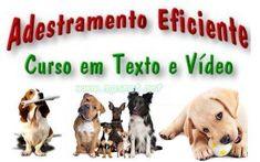 Adestramento Eficiente de Caes - Curso Completo. Veja em detalhes no site http://www.mpsnet.net/G/390.html via @mpsnet  Conheca o que ha de mais moderno em Treinamento de animais domesticos, Comportamento e Aprendizagem Animal. Veja em detalhes neste site