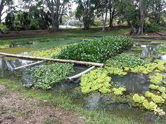 Wetland Waste Treatment   ADREC