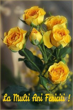 One of June's birth flowers is the Rose (yellow roses convey jealousy or a decrease in love) ~ Ana Rosa Beautiful Rose Flowers, Amazing Flowers, My Flower, Beautiful Gardens, Beautiful Flowers, Beautiful Gorgeous, Simply Beautiful, Beautiful Pictures, Rose Cottage