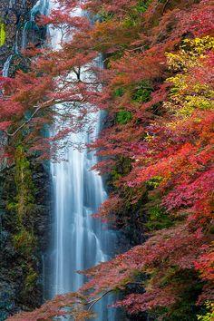 djferreira224:  Colorful Fall byChaluntorn Preeyasombat Minoh (Minoo) Fall in autumn. Located near Osaka, Japan.