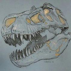 Free for personal use Dinosaur Skull Drawing of your choice Dinosaur Sketch, Dinosaur Drawing, Dinosaur Art, Dinosaur Skeleton, Animal Drawings, Art Drawings, T Rex Jurassic Park, Dinosaur Posters, Dinosaur Tattoos