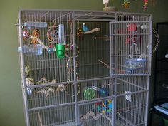 Pepper's cage is stock with lots of natural shredding toys and a variety of perches.
