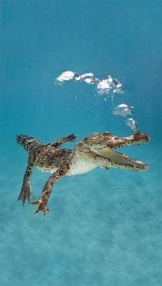 Blowing bubbles croc style lol :)