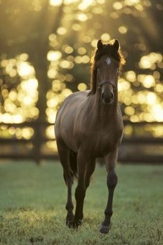 I love the light in this picture!  #horses #photography