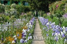 Giverny Iris Border - Claude Monet's Garden in France