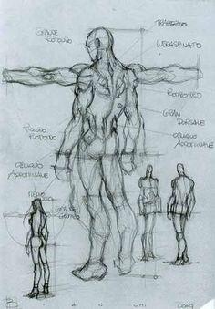 character-male-anatomy28