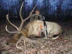 Elk hunting - OUTDOORSMAN.com
