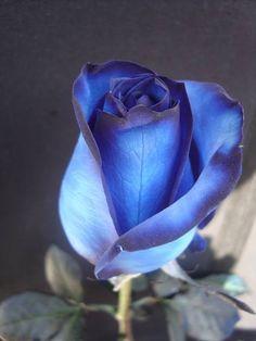 rosa azul www.murrikoradio.com