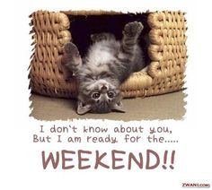 I am ready for the week end Cute Kittens, Cute Little Kittens, Cats And Kittens, Bon Weekend, Nice Weekend, Finally Weekend, Finally Friday, Weekend Plans, Weekend Breaks