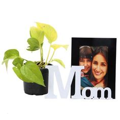 Plants for Mom at Bookmyflowers.com