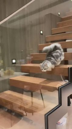 Funny Cute Cats, Cute Baby Cats, Cute Cat Gif, Cute Little Animals, Cute Cats And Kittens, Baby Dogs, Cute Funny Animals, Kittens Cutest, Cute Babies