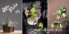 Veja nesta matérias dicas e o passo a passo de como dividir e replantar orquídeas de todos os tipos.
