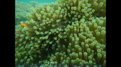 UNDER WATER SHOTS OF SCUBA DIVING @ Havelock Island, Andaman & Nicobar I... Water Camera, Havelock Island, Andaman Islands, Camera Shots, Scuba Diving, Tours, Holidays, Diving, Holidays Events