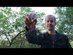 Czarny bez (działanie lecznicze, zastosowanie) - YouTube