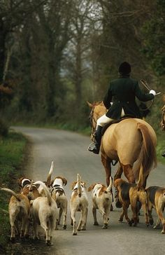 https://www.facebook.com/The.Hunting.Experience Tally Ho, Country Lifestyle, Country Estate, English Country Manor, English Countryside, Equestrian Style, Equestrian Fashion, Hunt Club, American Foxhound