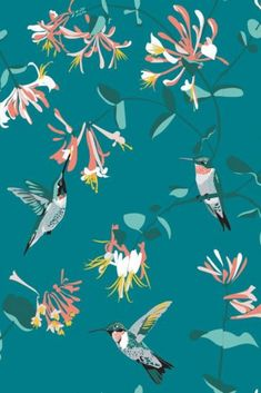 Striking teal wallpaper with hummingbird design. The hummingbirds are feeding from coral pink honeysuckle. Beautiful wallpaper for lounges and bedrooms. Hummingbird Tattoo Black, Hummingbird Sketch, Hummingbird Wallpaper, Hummingbird Painting, Hummingbird Quotes, Origami Hummingbird, Hummingbird Cupcakes, Hummingbird Illustration, Hummingbird House