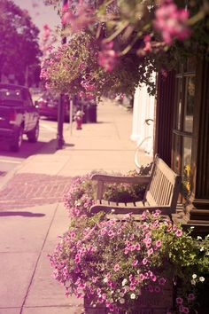 Summer flowers #summer #flowers #pink#benches