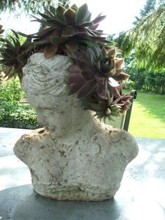 Sempervivum make great 'hair' for the terracotta heads - they kind of remind me of Medusa, with the hair of snakes, only not so creepy...