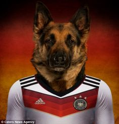 German shepherd.  World Cup Brazil 2014 teams combined with their national dog