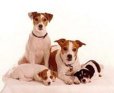 Dog Family.