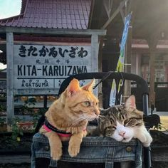 Cats Fuku-Chan and Daikichi find fame travelling around the world - Ego - AlterEgo Travel Around The World, Around The Worlds, Travelling, Kitty, Japan, Cats, Photography, Animals, Gatos