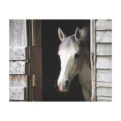 "Grey Mare Horse 20""x 16"" Wrapped Canvas"