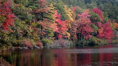 Fall Foliage Reflection by Laura Duhaime (c) 2014  There is nothing like a crisp fall day in New Hampshire's White Mountains. This Chilly October day I found such a burst of color with my camera lens. This beautiful colorful scene is foliage at it's finest. This was taken across picturesque Chocorua Lake where the foliage on the shoreline reflect into the waters.   The magnificent fall colors make autumn a beautiful time to capture the beauty of nature.