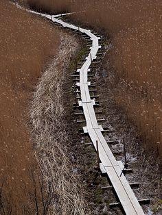 Nature path near Helsinki. Finland.