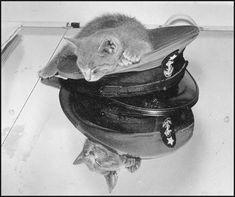 gatito marinerito