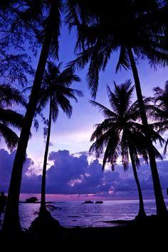 Super Ideas for palm tree wallpaper iphone purple Beautiful Sky, Beautiful Beaches, Beautiful World, Beautiful Landscapes, Beautiful Scenery, Tree Wallpaper Iphone, Sunset Wallpaper, Nature Wallpaper, Aesthetic Backgrounds