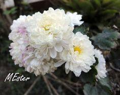 * FLORES BRANCAS (white flowers) - Viagens com flores, ervas e frutos