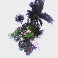 The palma chilena ;) The #winter is coming :D #rainyday #tinyplanet #rollworld #theta360 #theta360official #littleplanet #photoshpere #livingplanetapp #ricohtheta #360camera #smallworld #spherical #roundworlds #tinyplanetbuff #360panorama #360photography #ricohtheta360 #360  #webstapick