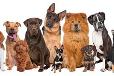 15 Dibujo De Perros Ideas Dogs Puppies Dogs And Puppies
