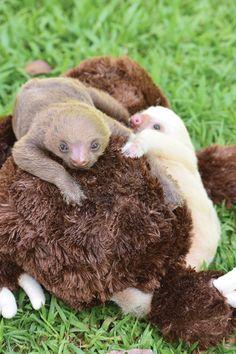9 Wonderful Animal Sanctuaries to Visit Around the World Wild Animal Sanctuary Colorado, Wild Animal Rescue, African Safari, Around The Worlds, Sloths, Costa Rica, Awesome, Animals, Adventure