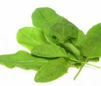 La Acedera, planta perteneciente a la familia de las  Poligonaceas, se caracteriza por tener un tallo mas bien