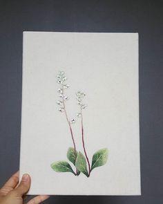 노루발풀꽃