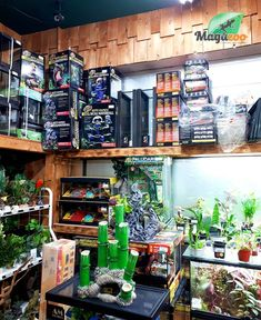 We're staying open! 🤝 We're here for you for all your reptile needs. A reminder that you can order online or by phone to facilitate an easy pickup! 👨💻📞 We also have great gift ideas and gift cards for all reptile lovers. Stay positive, stay strong, we're here for you and your reptiles! ❤ #MagazooReptiles Reptile Shop, Witch Shop, Reptile Accessories, Stay Strong, House In The Woods, Gift Cards, Reptiles, Terrarium, Great Gifts